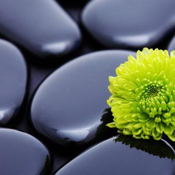 Shungite: The detox healing mineral